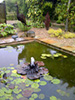 copper water lily fountain in a large lily pond