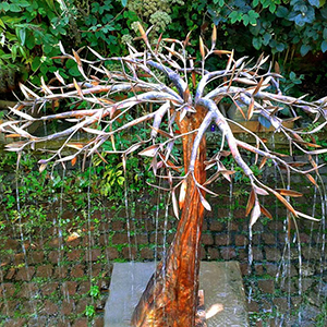 Copper Olive Rain Tree by Gary Pickles
